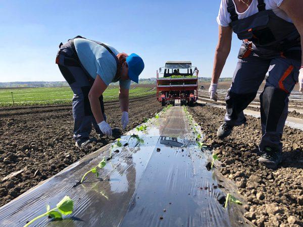 Pojďte farmařit na farmu v Božicích u Znojemska.
