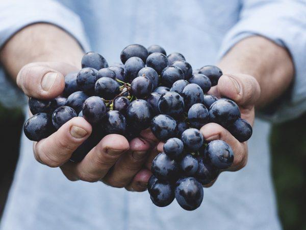 Jaké barevné hrozny jsou nejzdravější?