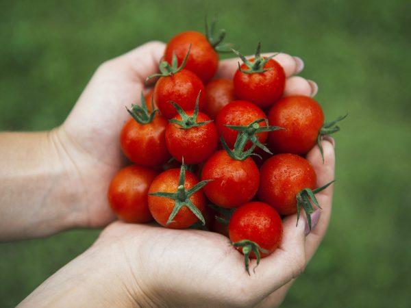 Proč jíst rajčata celý rok?