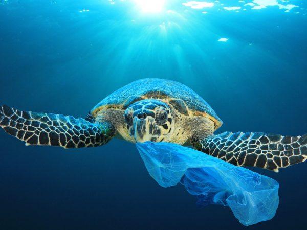 Mají zanesené oceány šanci?